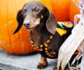 Halloween Safety for Your Pets