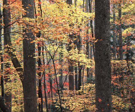 Fall Foliage In Western North Carolina Asheville Com