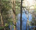 Weaverville Pond